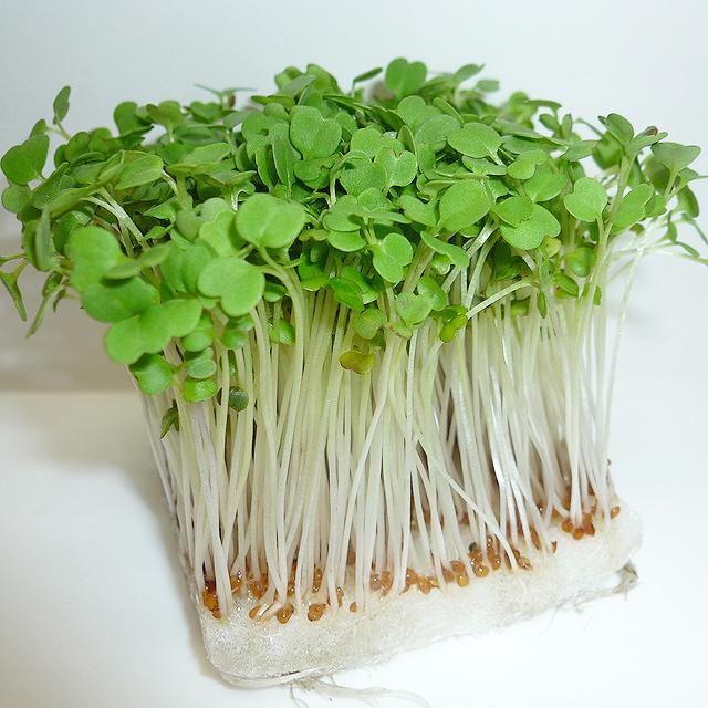 スプラウト|種苗・園芸・資材の総合メーカー フジミ・オフィス